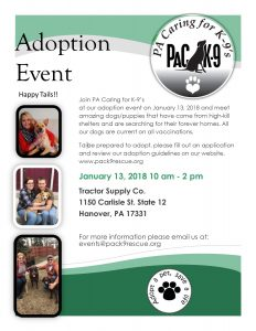 Meet Our Adoptable Dogs!
