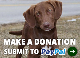 btn_DonateThroughPayPal